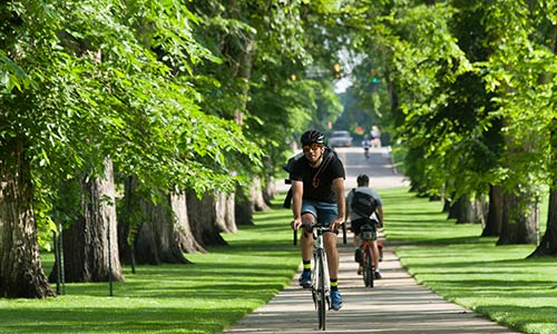 "Photograph of a man riding bike in a southward direction towards the camera on sidewalk that runs down the middle of ""The Oval"", and a man riding bike northward on that same sidewalk, away from camera. There are big trees and green grass on either side of the sidewalk. Sunlight is streaming in from the east side between the trees."