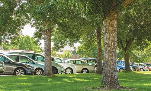 Photograph of row of cars parked behind a grassy area with several trees, on a sunny day.